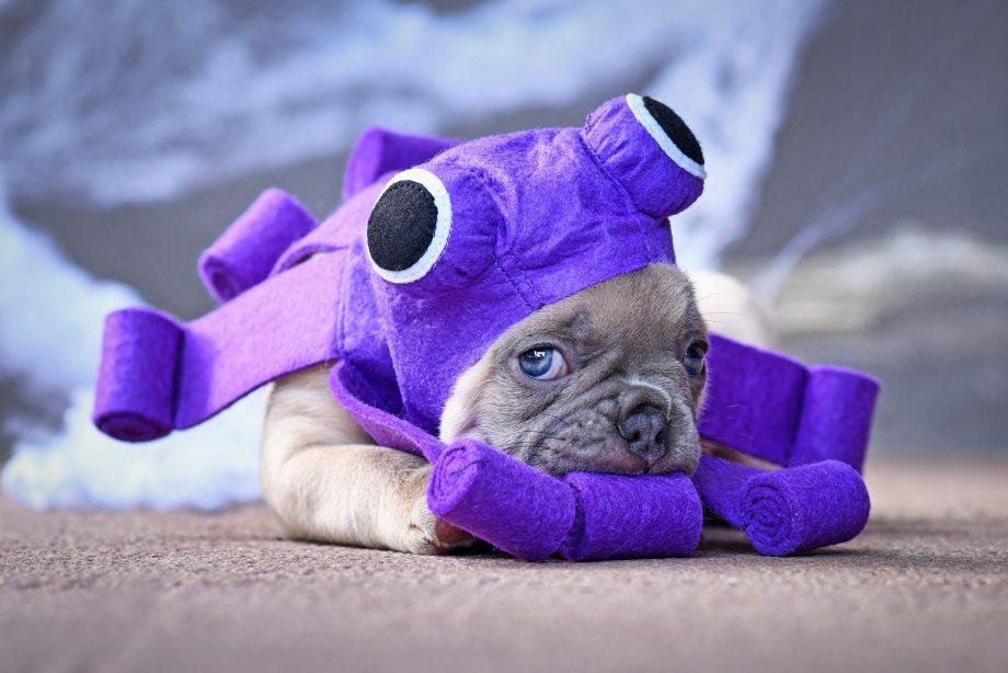 Trauriger Welpe im Kraken-Kostüm