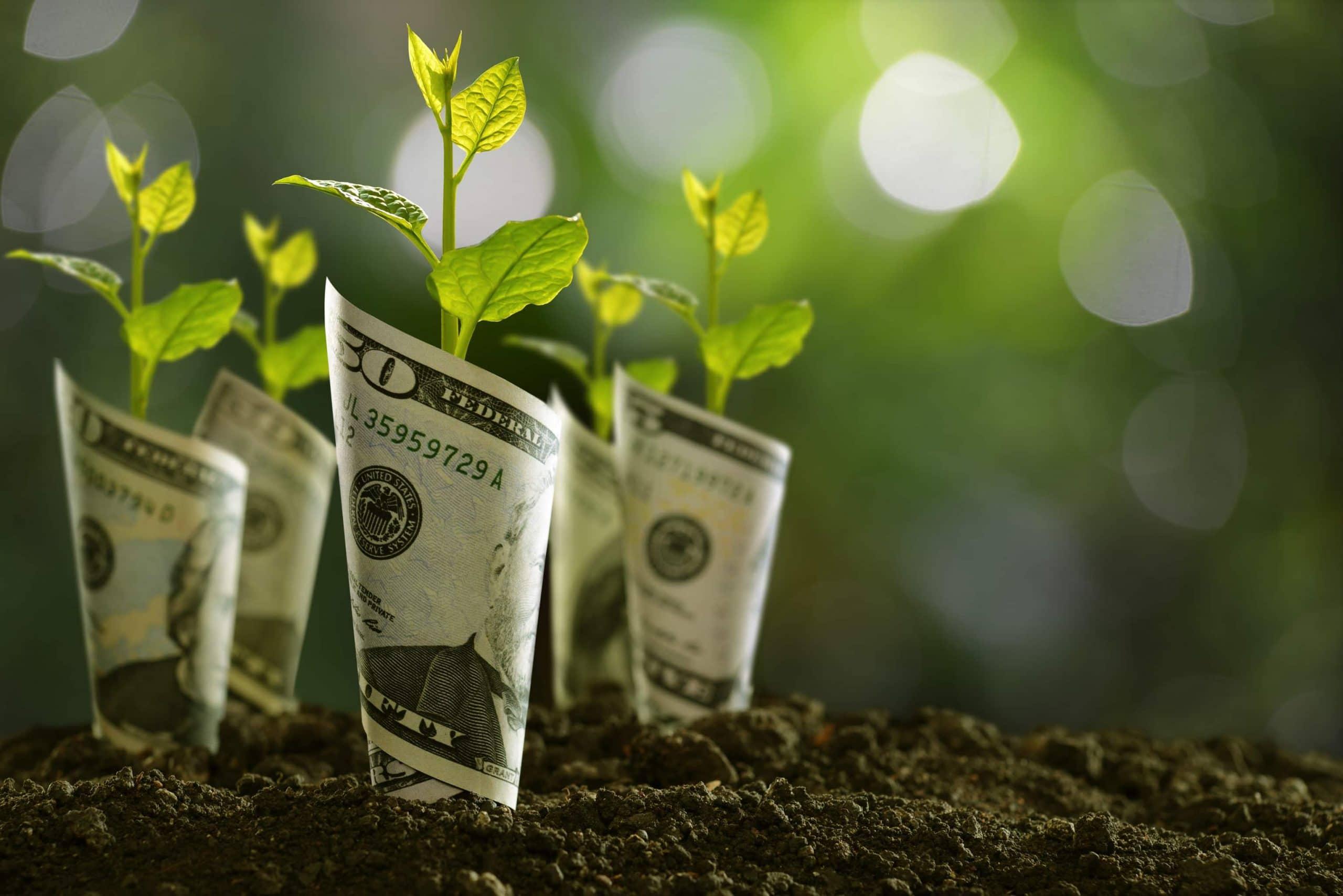 BTC Wachstum