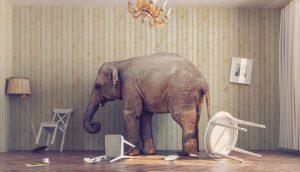 Bitcoin ist ein Elefant im Raum.