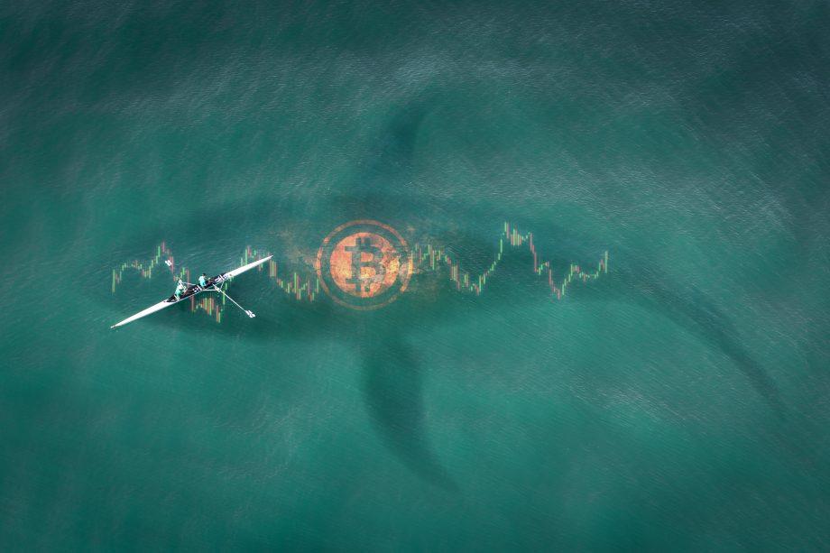 Wal schwimmt unter Segler neben einem Bitcoin Symbol