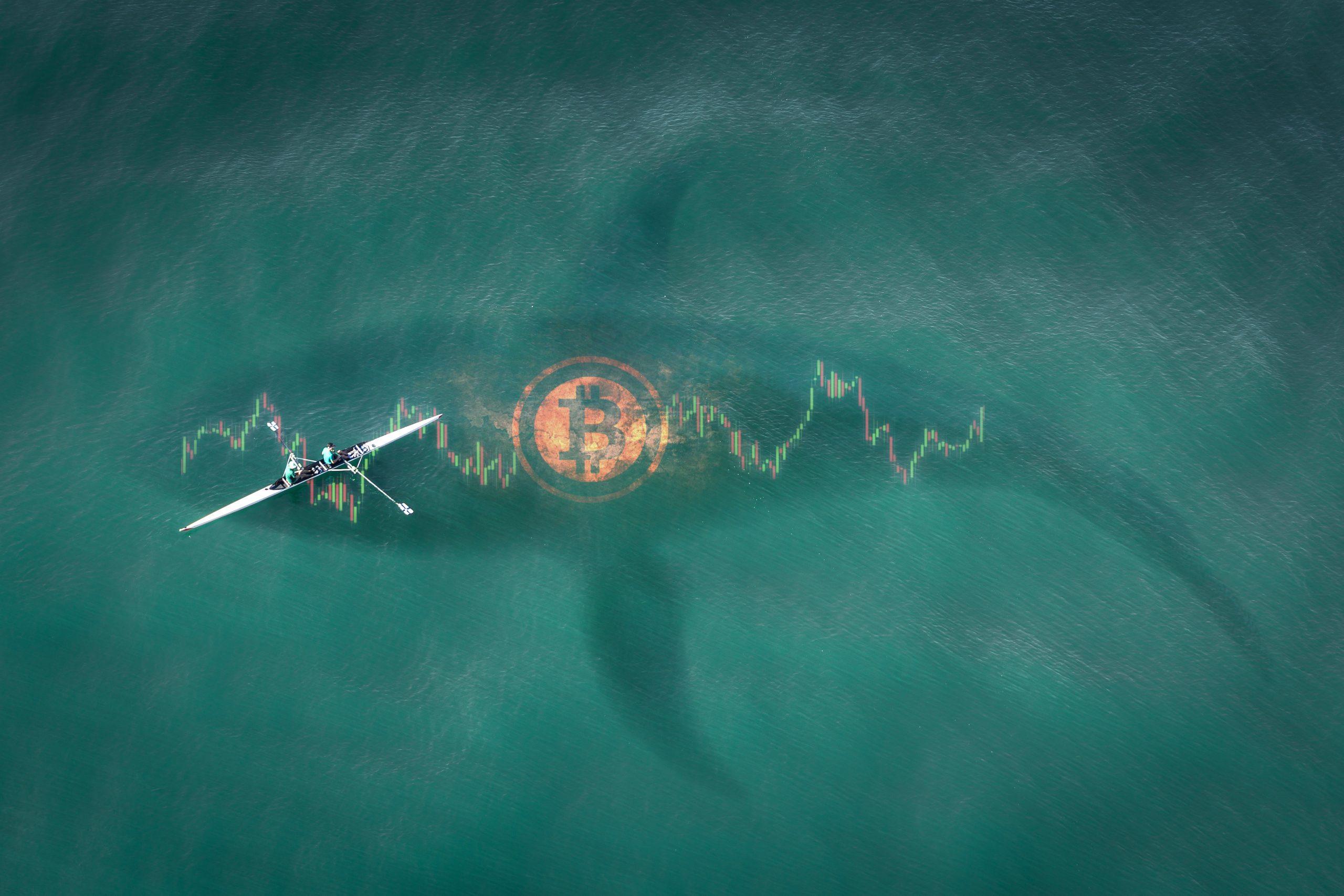 18.000 Bitcoin: Anonyme BTC-Wale decken sich massiv ein - BTC-ECHO | Bitcoin & Blockchain Pioneers