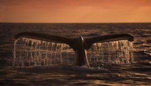 Bitcoin Wale tauchen ab