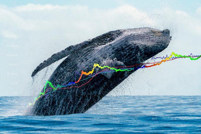 Wal der sich aus dem Wasser erhebt, darüber das Stock-to-Flow-Modell für Bitcoin von PlanB