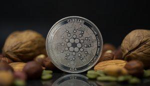 Cardano-Münze neben Nüssen