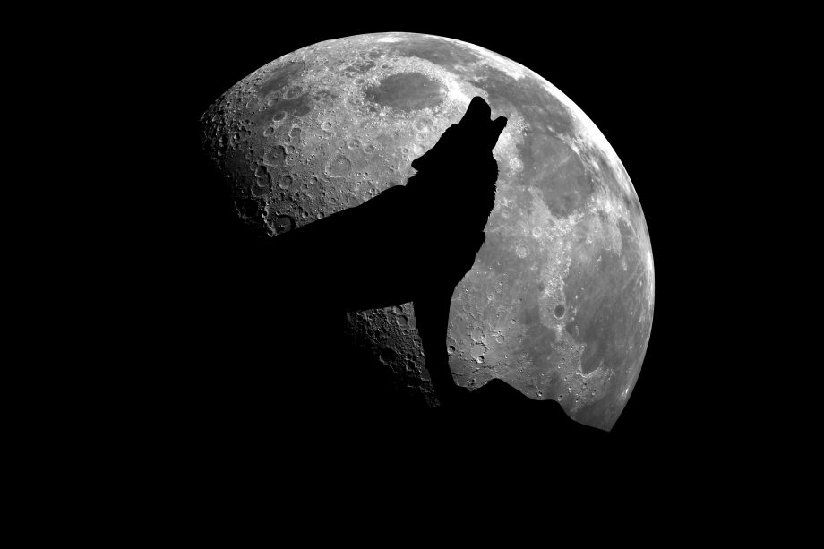 Dog barking at the moon.