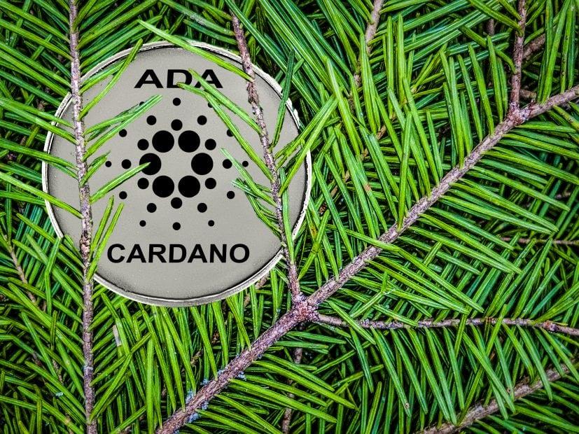 Cardano-Münze von Zweigen bedeckt