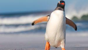 Ein Pinguin läuft in durch eine eisige Landschaft.