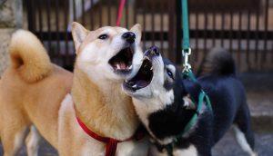 Dogecoin vs SHIB (symbolbild)