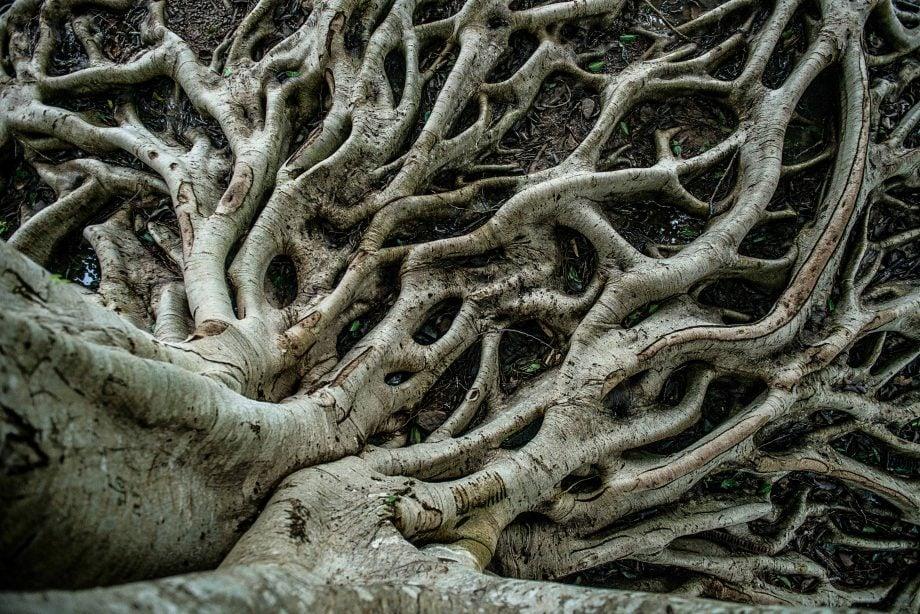 Wurzeln eines Baumes.