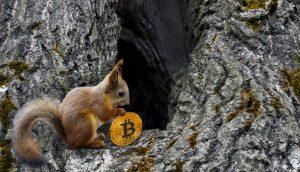 Ein Eichhörnchen hodlt einen Bitcoin