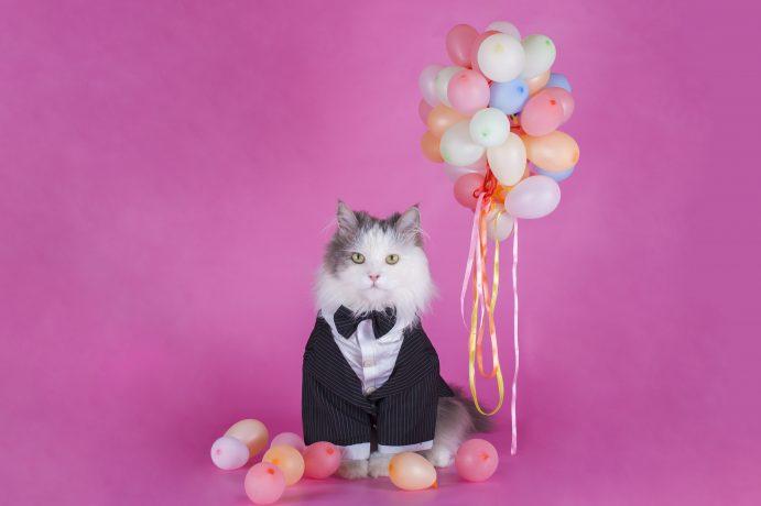 Katze im Sacko mit Luftballons