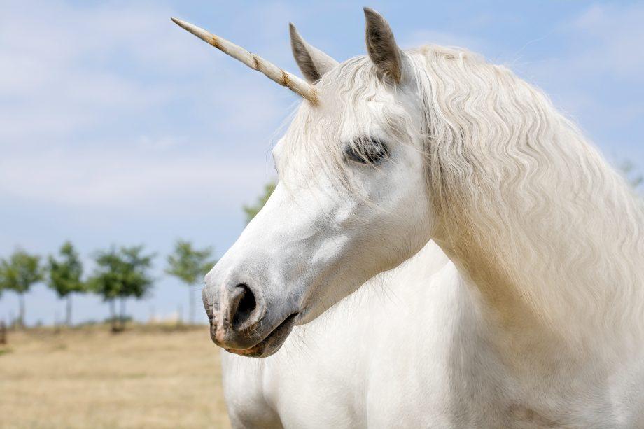 Ein Unicorn.