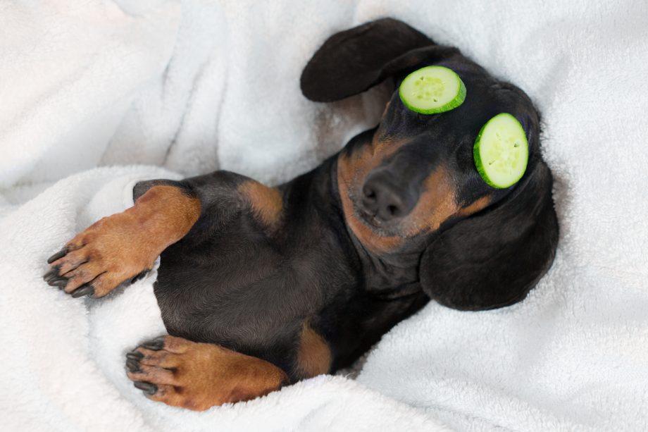 Relaxter Hund mit Gurkenmaske