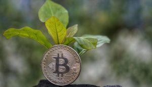 Grün Bitcoin