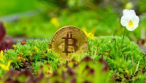 Bitcoin-Münze liegt auf Moos