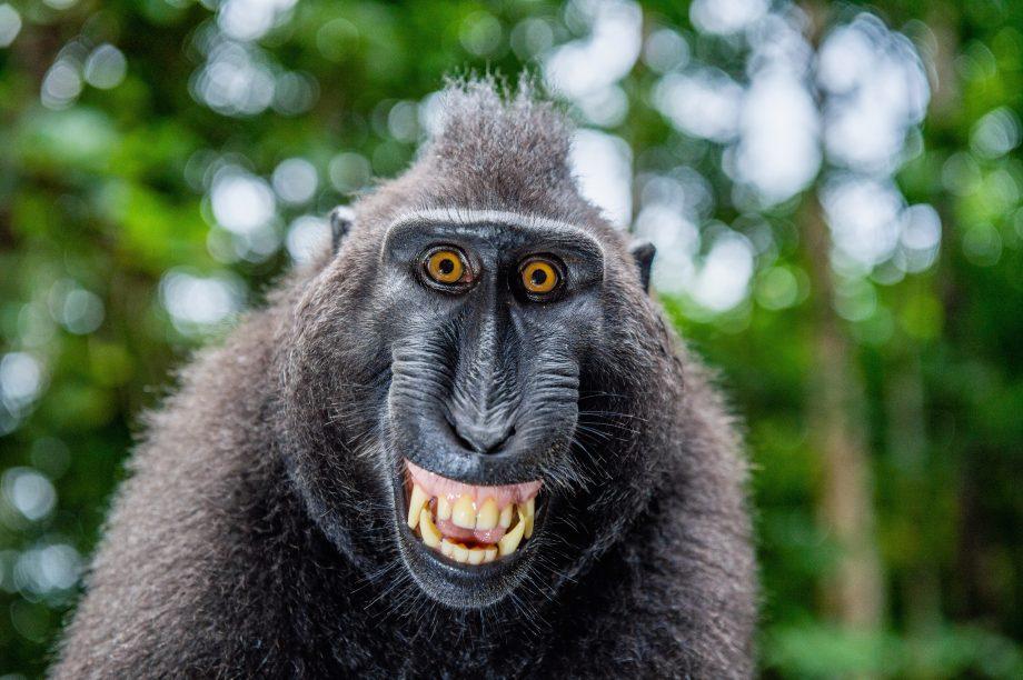 Ein lächelnder Affe