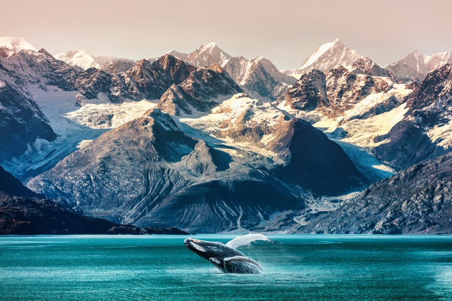 Ein Walfisch in Alaska.