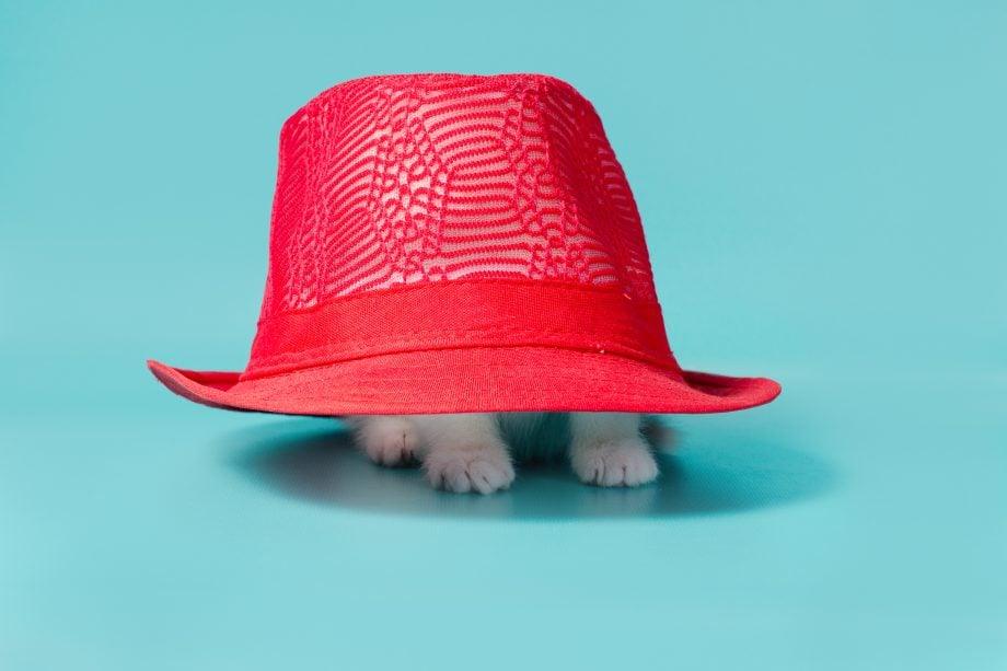 Eine Katze versteckt sich unter einem roten Hut.
