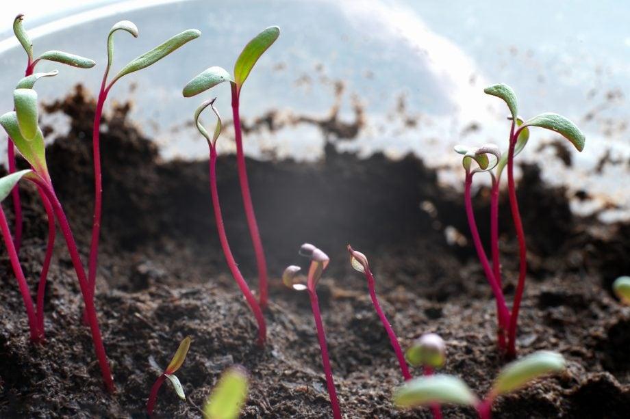 Pflanzenzucht